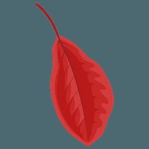 Black tupelo red leaf clipart
