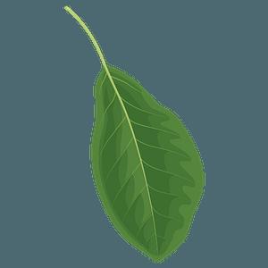 Black tupelo spring leaf clipart