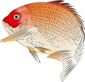 Red Seabream clipart