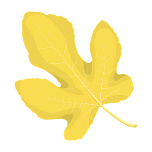 Common fig autumn leaf clipart