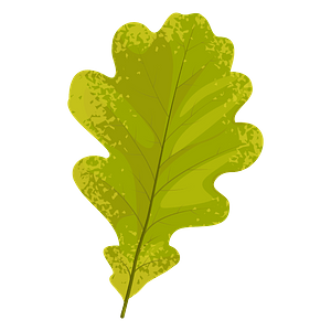 English oak autumn leaf clipart