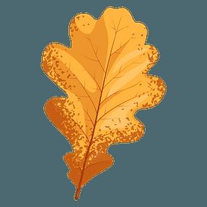 English oak late autumn leaf clipart