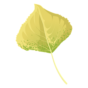 Lombardy poplar autumn leaf clipart