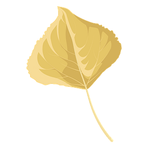 Lombardy poplar late autumn leaf clipart