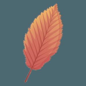 Red alder autumn leaf clipart