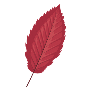 Red alder late autumn leaf clipart