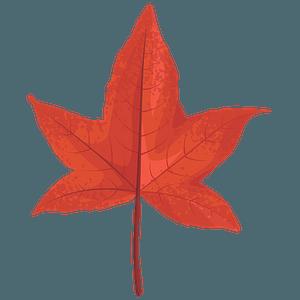 Sweetgum red leaf clipart