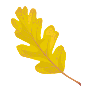 Valley oak autumn leaf clipart