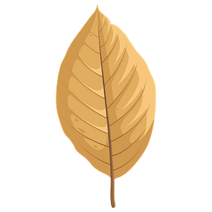 Cucumber tree autumn leaf clipart