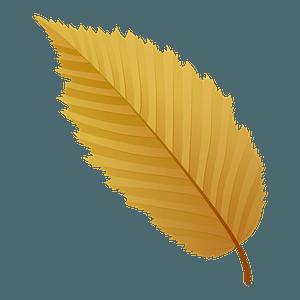 American hornbeam autumn leaf clipart