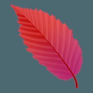 American hornbeam red leaf clipart