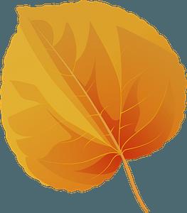 Katsura tree autumn leaf clipart