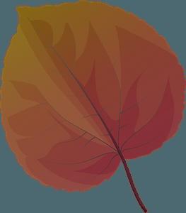 Katsura tree spring leaf clipart