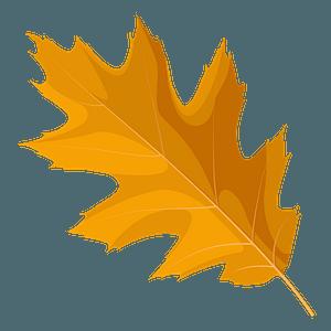 Northern red oak autumn leaf clipart