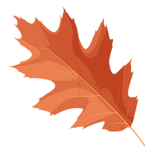 Northern red oak red leaf clipart