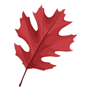 Shumard oak red leaf clipart