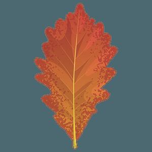 Swamp white oak autumn leaf clipart