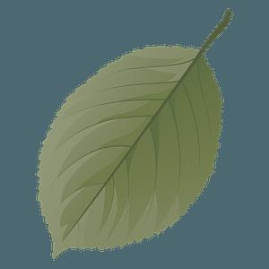 Wild cherry tree summer leaf clipart