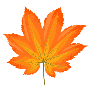 Vine maple yellow leaf clipart