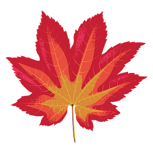 Vine maple red leaf clipart