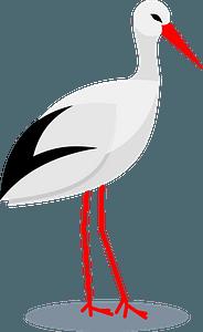Stork bird clipart