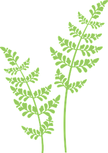 Green plant clipart