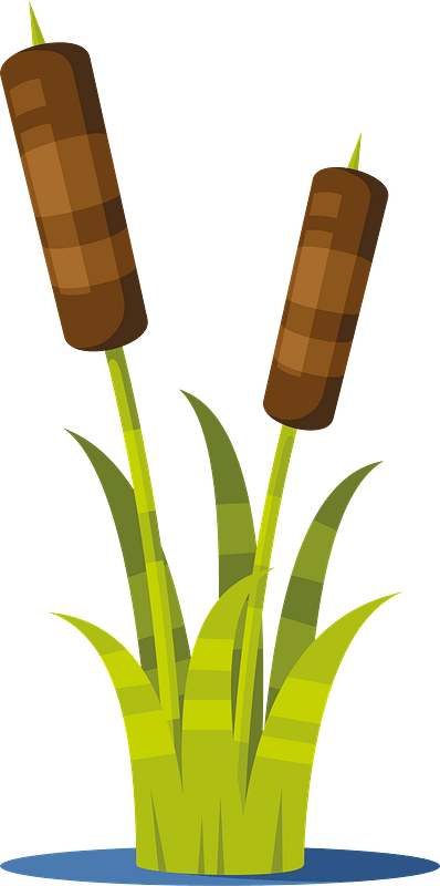 Reed Plant Clipart Free Download Transparent Png Creazilla