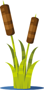 Reed plant clipart