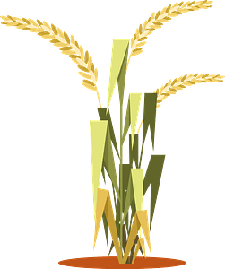 Rice plant clipart