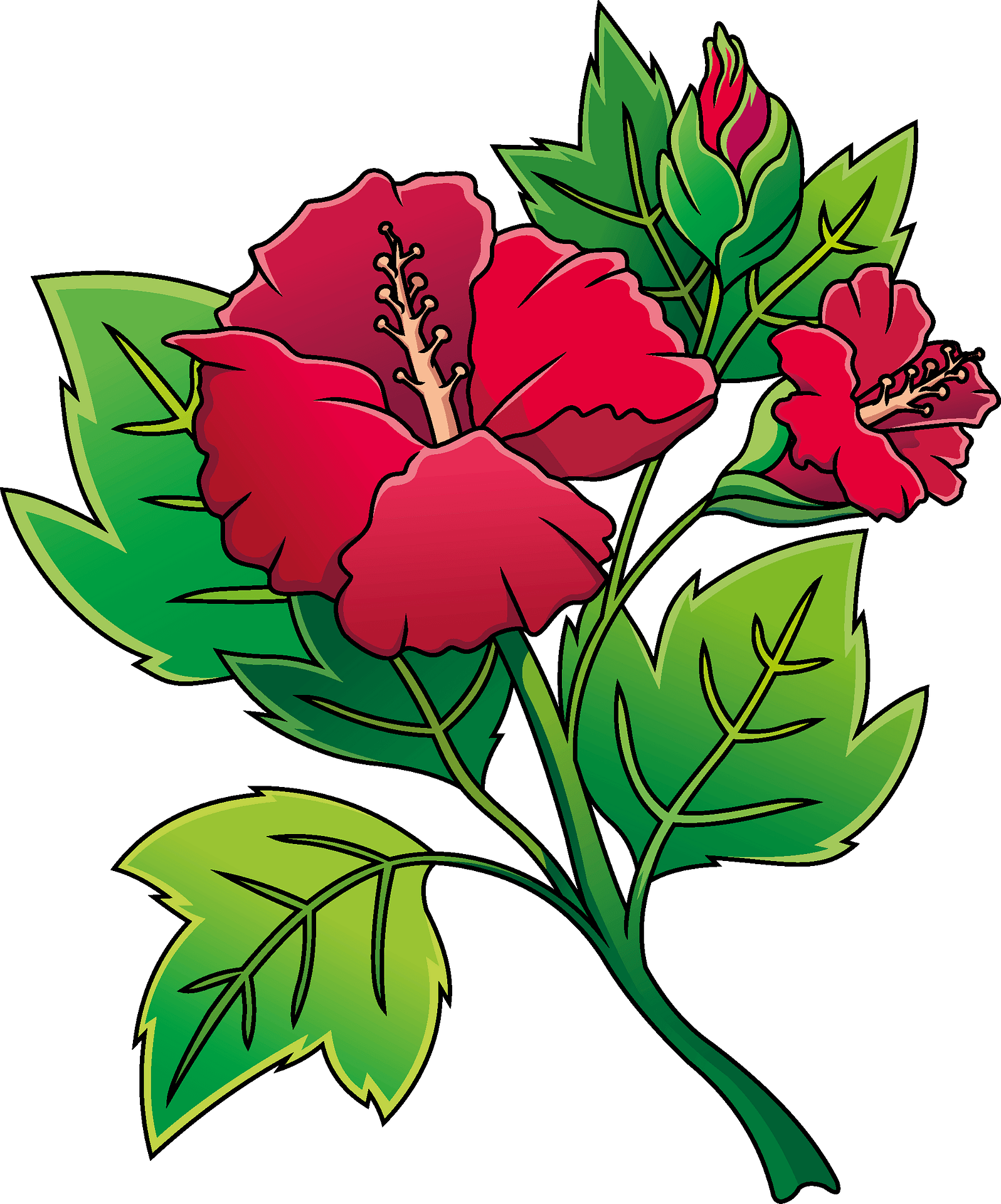 Hibiscus Clipart Clip Art - Clip Art Hibiscus Flower - Png Download  (#48273) - PinClipart