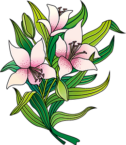 Lilies clipart
