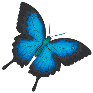 Ulysses butterfly clipart