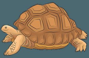 アルダブラゾウガメのクリップアート