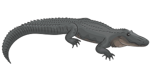 Amerikaanse alligator clipart