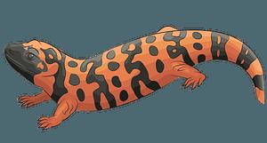 アメリカドクトカゲのクリップアート