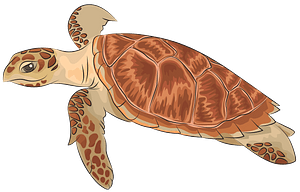 Hawksbill Sea Turtle clipart