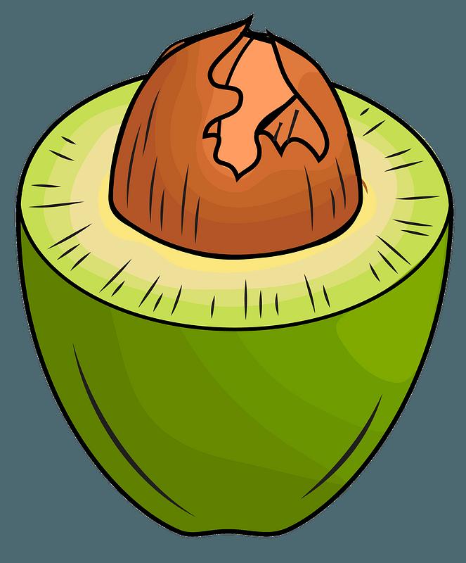 Avocado clipart. Free download transparent .PNG | Creazilla