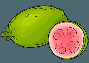 Fresh Guavas clipart