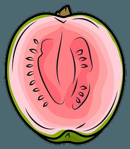 Half Guava clipart
