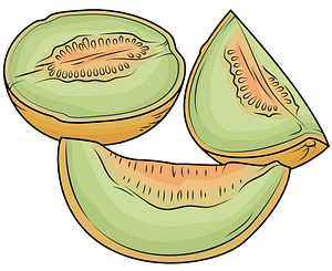 Melon Cut into Pieces clipart