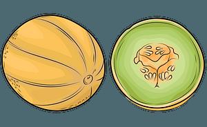 Melon and half clipart