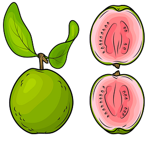 Whole Guava and a Half clipart