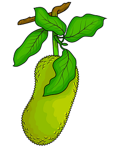 Jackfruit clipart