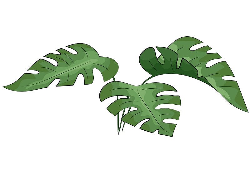 Monstera Leaves Clipart Free Download Creazilla