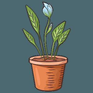 Flower in pot clipart