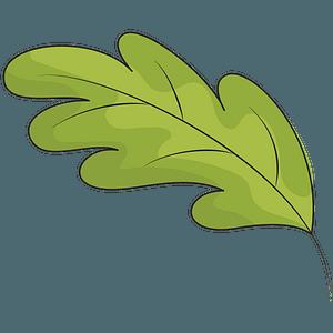 Green oak leaf clipart