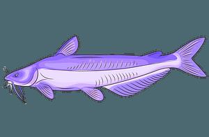 Blue Catfish clipart