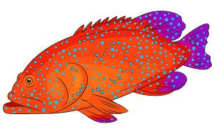 Blue Spotted Grouper clipart