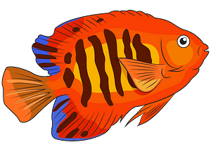 Flame Angelfish clipart