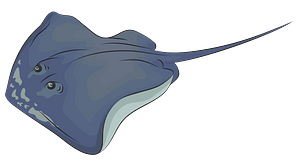 Southern Stingray clipart